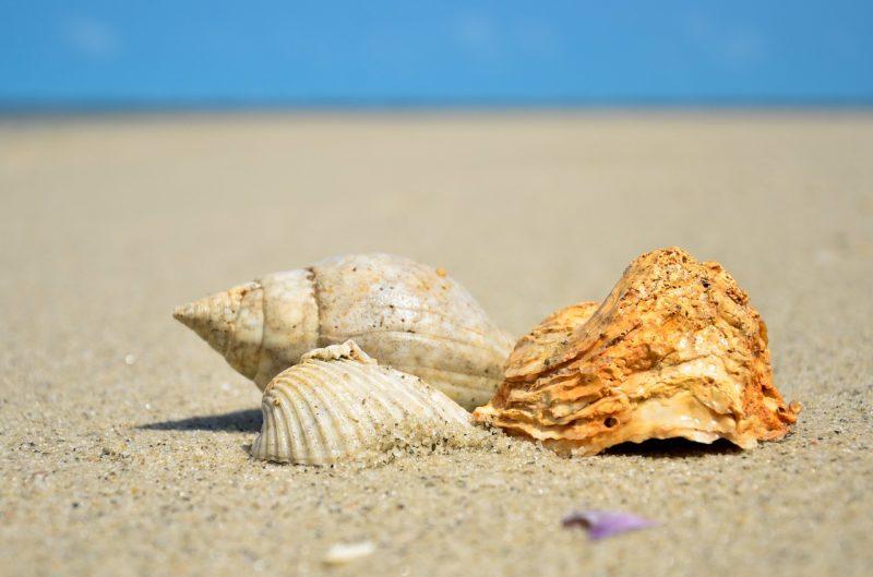 海と貝がら