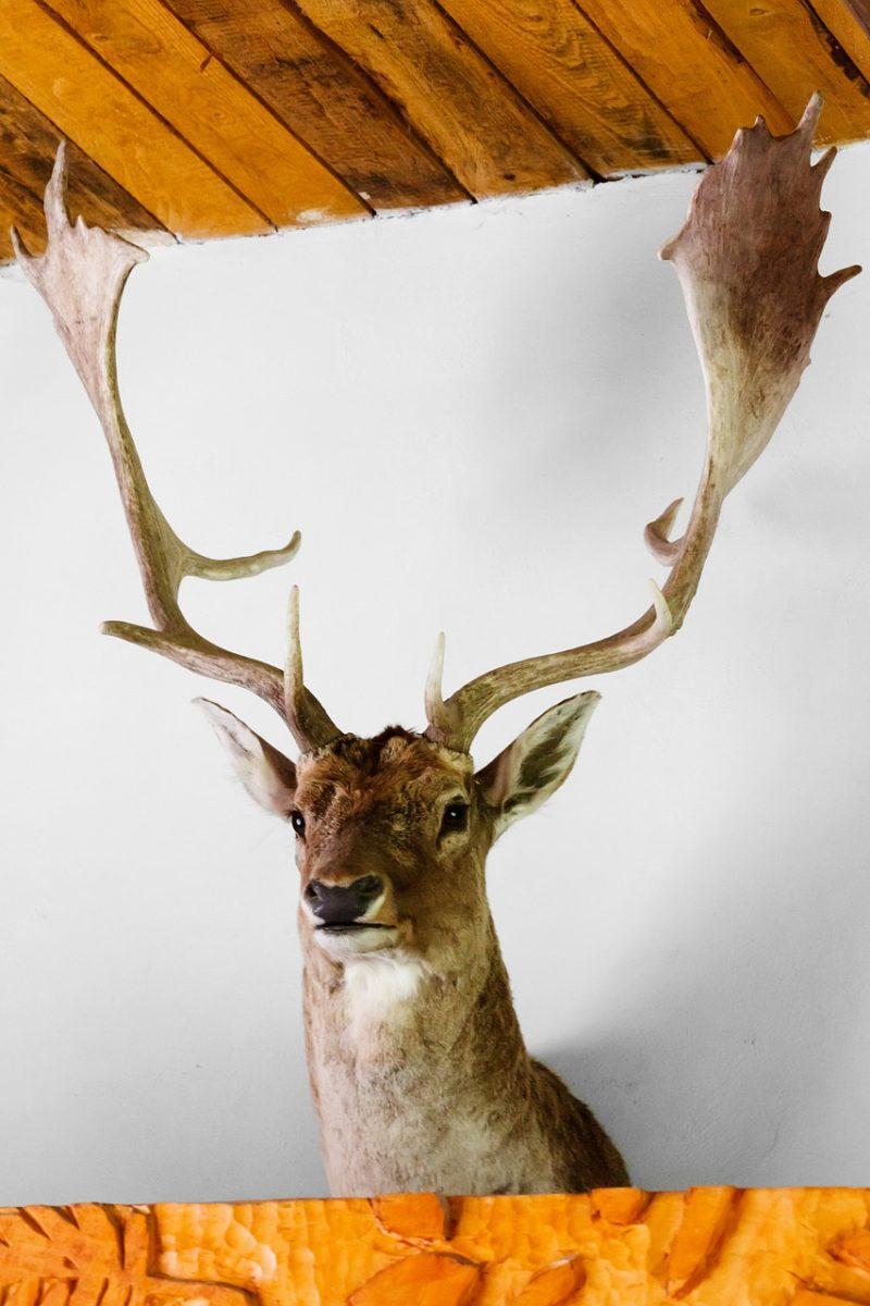 鹿のはく製
