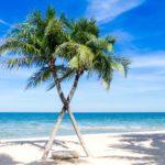 ビーチ ヤシの木