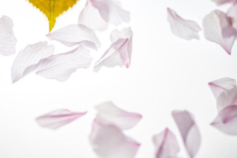 葉と花びら